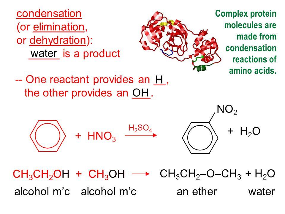 -- Condensation reactions polymerize amino acids into...