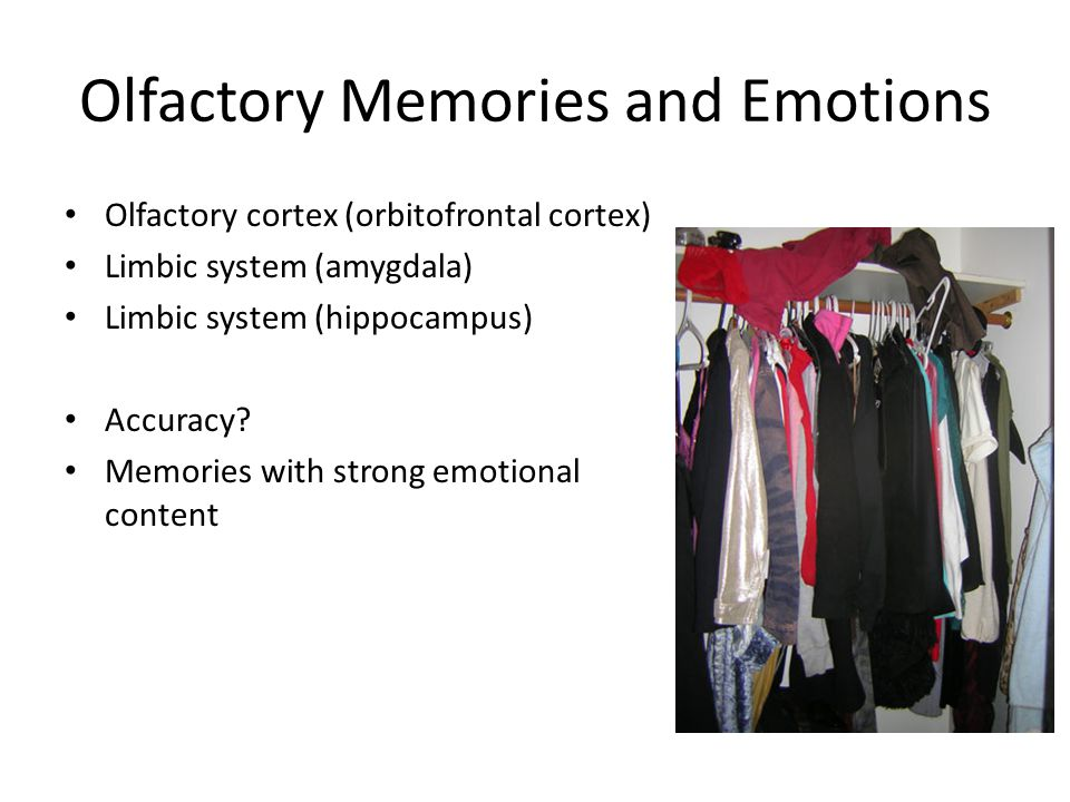 Olfactory Memories and Emotions Olfactory cortex (orbitofrontal cortex) Limbic system (amygdala) Limbic system (hippocampus) Accuracy.