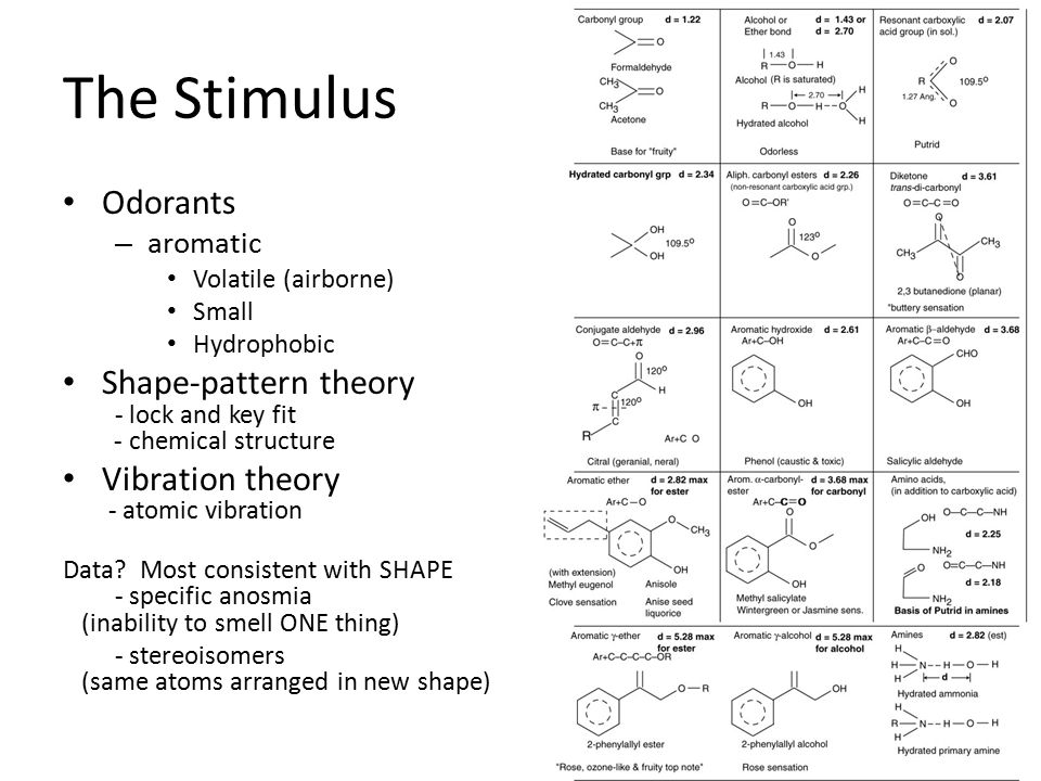 The Stimulus Odorants – aromatic Volatile (airborne) Small Hydrophobic Shape-pattern theory - lock and key fit - chemical structure Vibration theory - atomic vibration Data.
