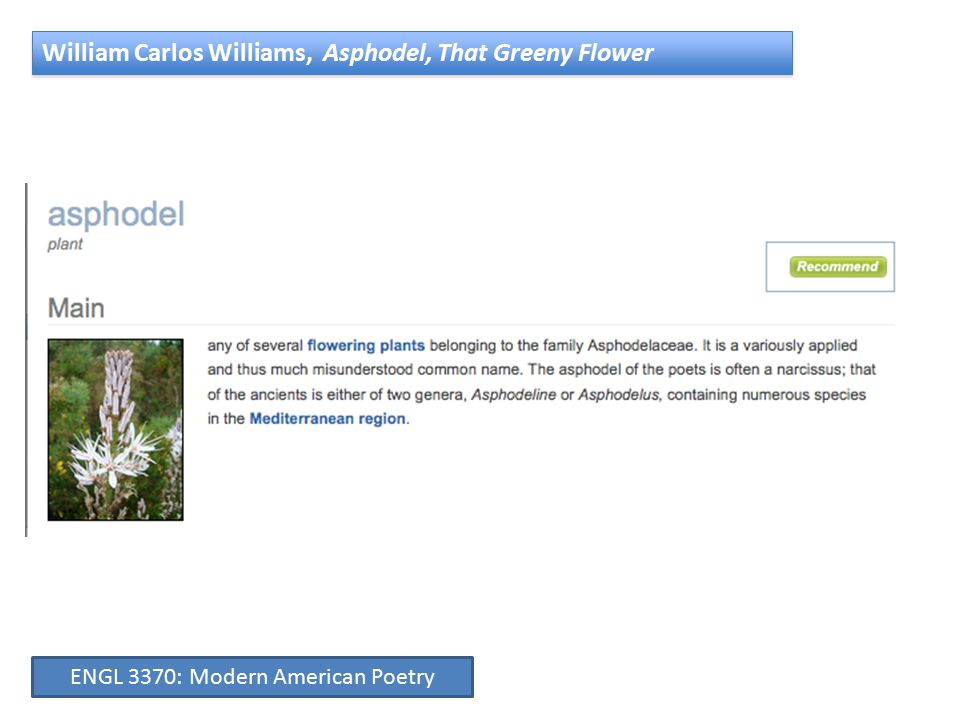 William Carlos Williams, Asphodel, That Greeny Flower ENGL 3370: Modern American Poetry