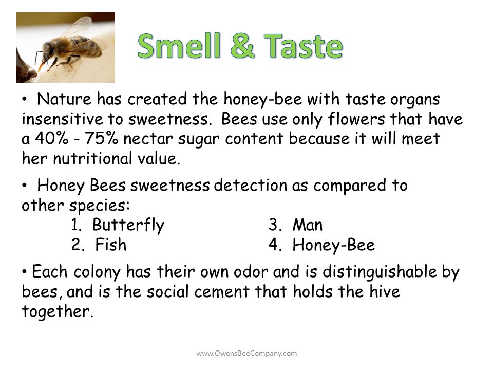Nature has created the honey-bee with taste organs insensitive to sweetness. Bees use only flowers that have a 40% - 75% nectar sugar content because
