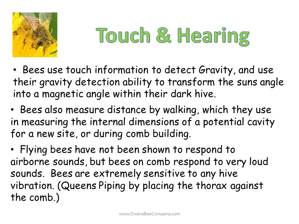 Bees use touch information to detect Gravity, and use their gravity detection ability to transform the suns angle into a magnetic angle within their d