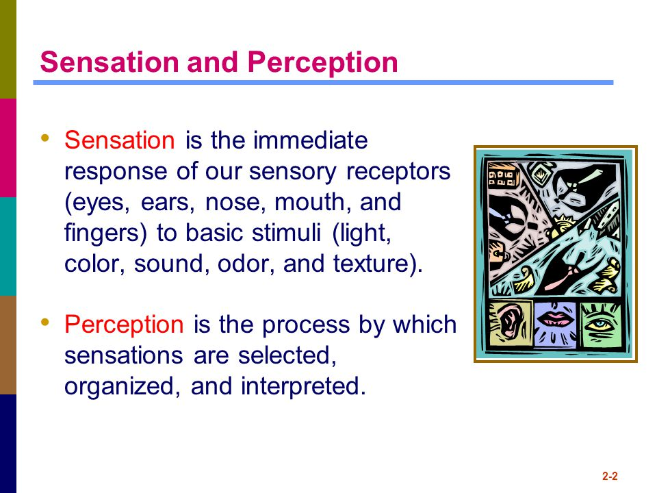 2-2 Sensation and Perception Sensation is the immediate response of our sensory receptors (eyes, ears, nose, mouth, and fingers) to basic stimuli (lig