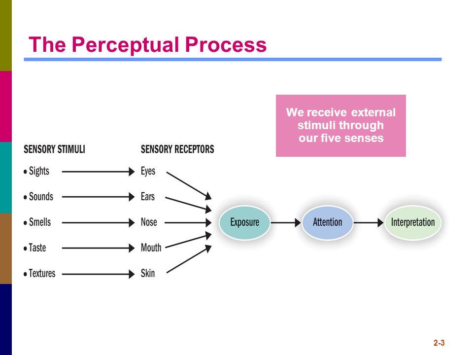 2-3 The Perceptual Process We receive external stimuli through our five senses
