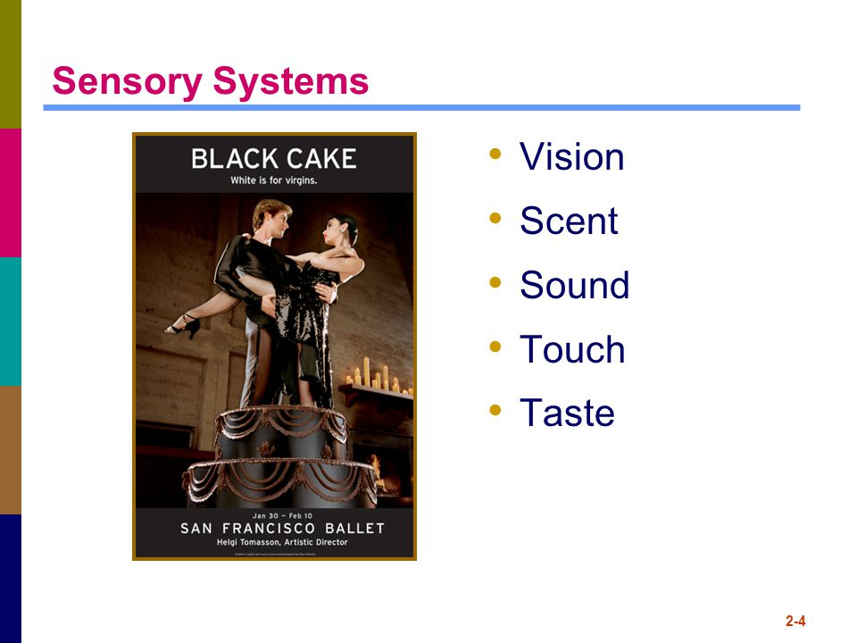 2-4 Sensory Systems Vision Scent Sound Touch Taste