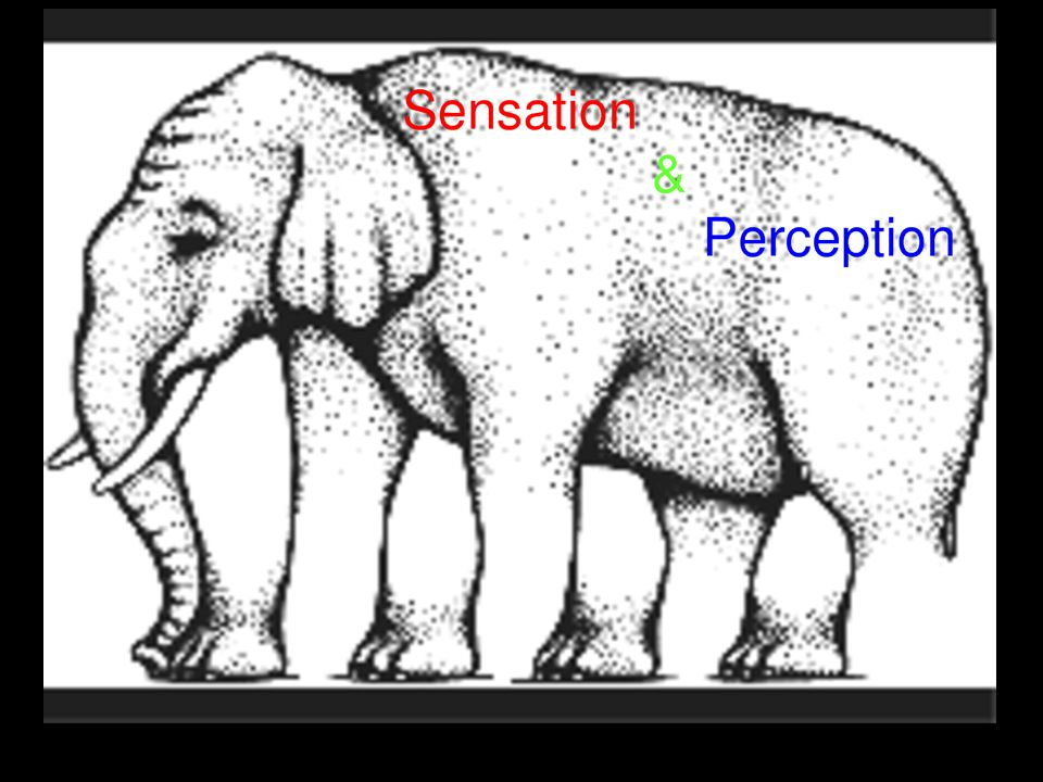 Visual Organization Grouping- the perceptual tendency to organize stimuli into coherent groups The rules of grouping were identified by the Gestalt psychologists and they illustrate how the perceived whole differs from the sum of its parts *