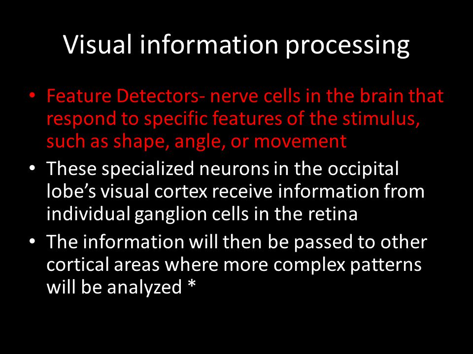 Visual information processing Feature Detectors- nerve cells in the brain that respond to specific features of the stimulus, such as shape, angle, or
