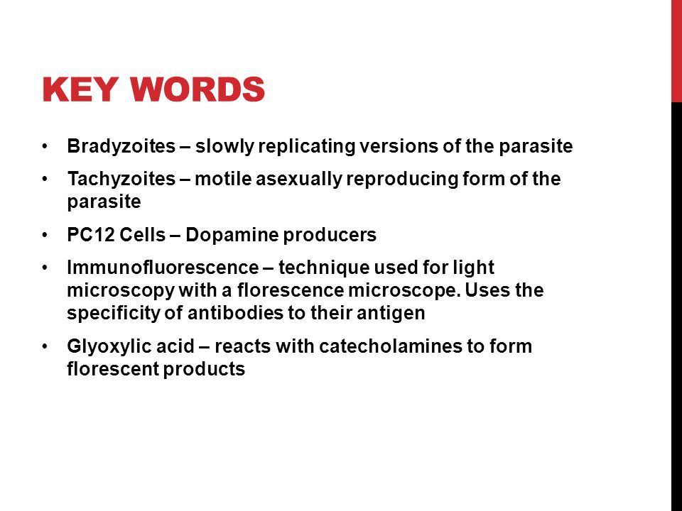 KEY WORDS Bradyzoites – slowly replicating versions of the parasite Tachyzoites – motile asexually reproducing form of the parasite PC12 Cells – Dopam