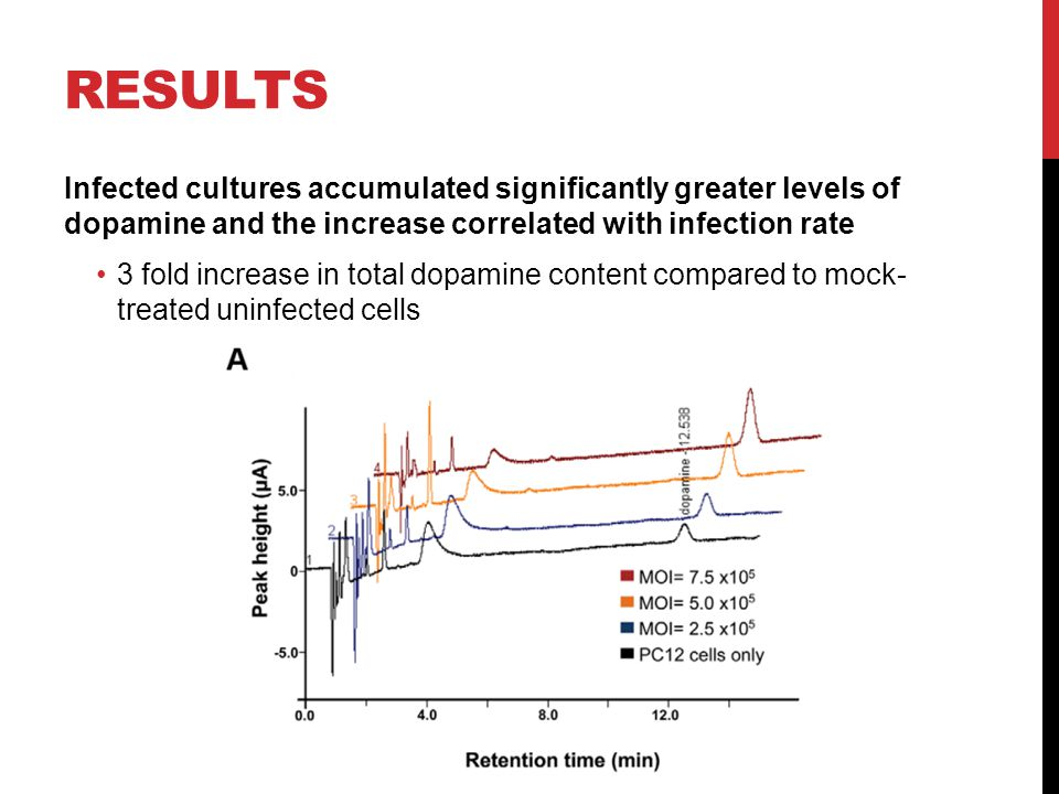 RESULTS Infected cultures accumulated significantly greater levels of dopamine and the increase correlated with infection rate 3 fold increase in tota