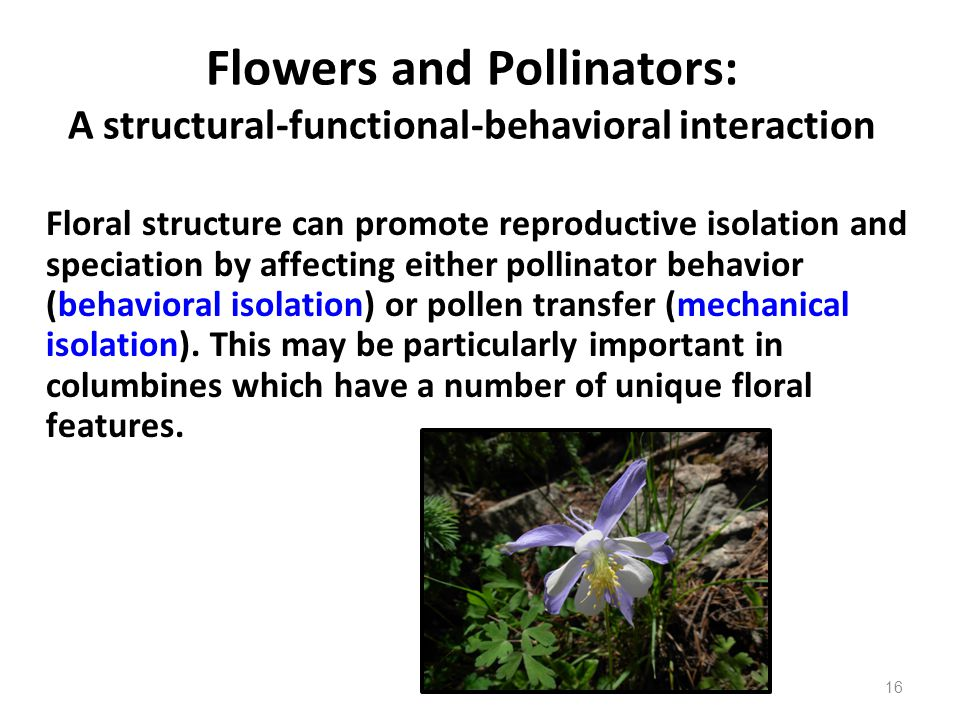 Flowers and Pollinators: A structural-functional-behavioral interaction Floral structure can promote reproductive isolation and speciation by affectin