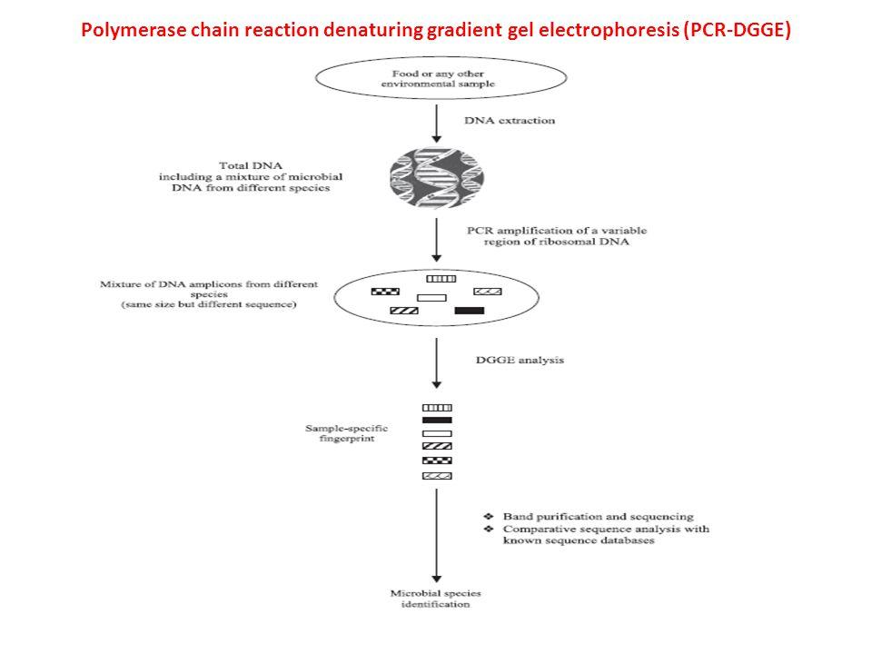 Polymerase chain reaction denaturing gradient gel electrophoresis (PCR-DGGE)