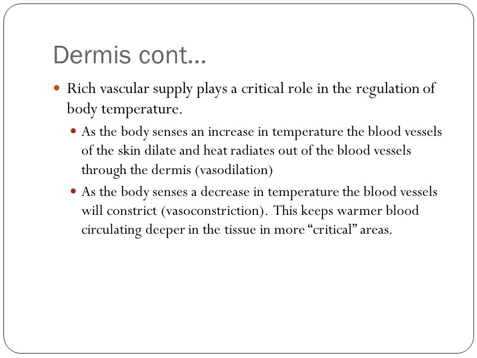 Dermis cont… Rich vascular supply plays a critical role in the regulation of body temperature.