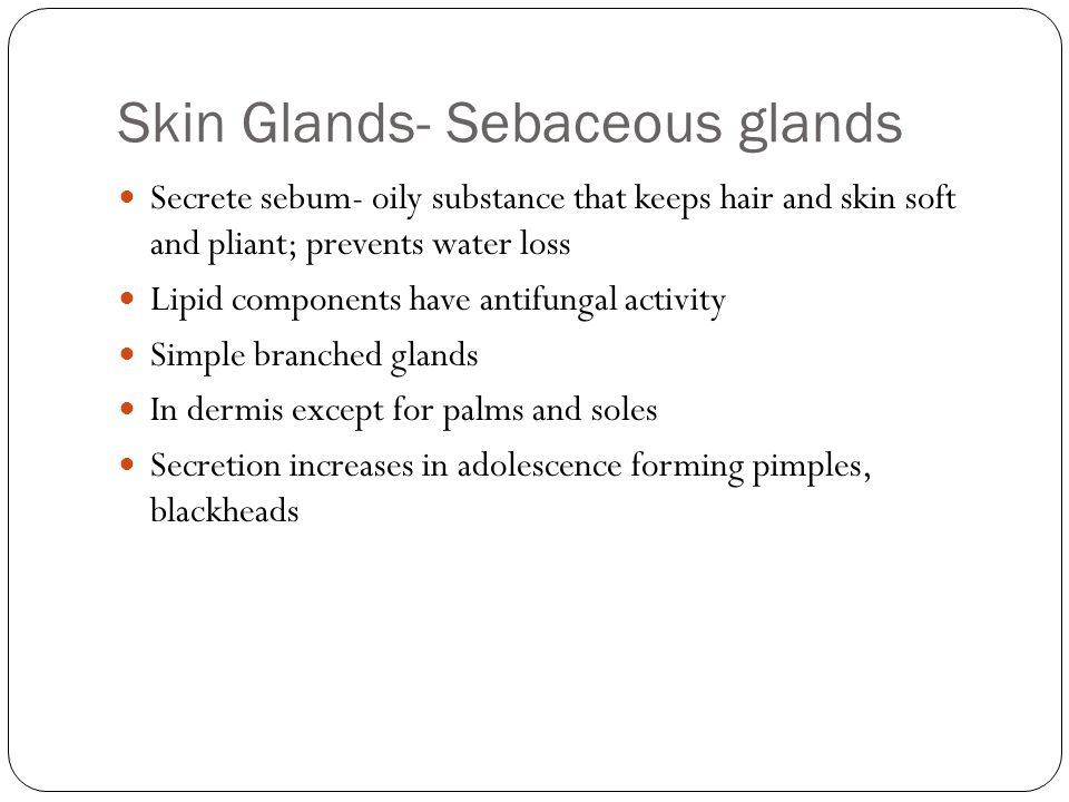Skin Glands- Sebaceous glands Secrete sebum- oily substance that keeps hair and skin soft and pliant; prevents water loss Lipid components have antifungal activity Simple branched glands In dermis except for palms and soles Secretion increases in adolescence forming pimples, blackheads
