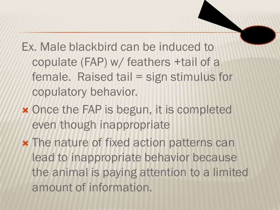 Ex. Male blackbird can be induced to copulate (FAP) w/ feathers +tail of a female. Raised tail = sign stimulus for copulatory behavior.  Once the FAP