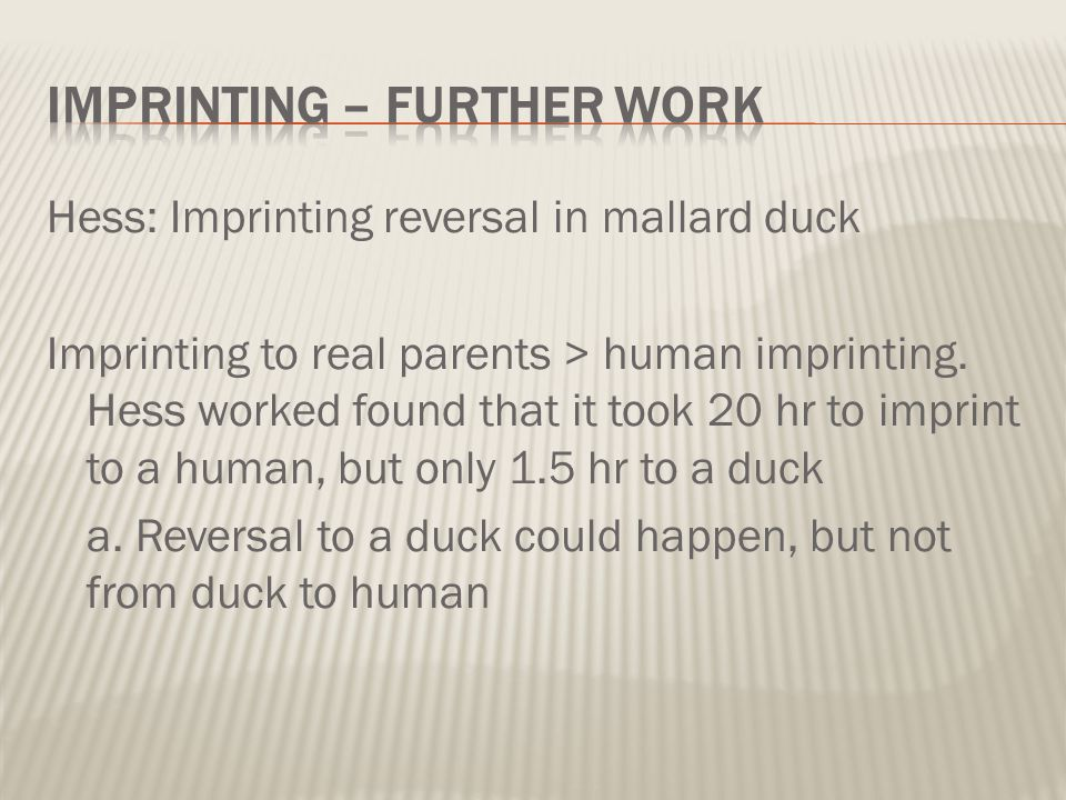 Hess: Imprinting reversal in mallard duck Imprinting to real parents > human imprinting. Hess worked found that it took 20 hr to imprint to a human, b