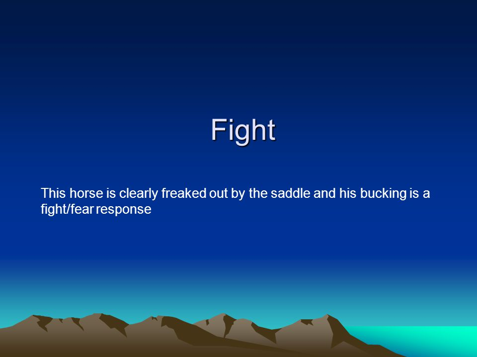Fight This horse is clearly freaked out by the saddle and his bucking is a fight/fear response