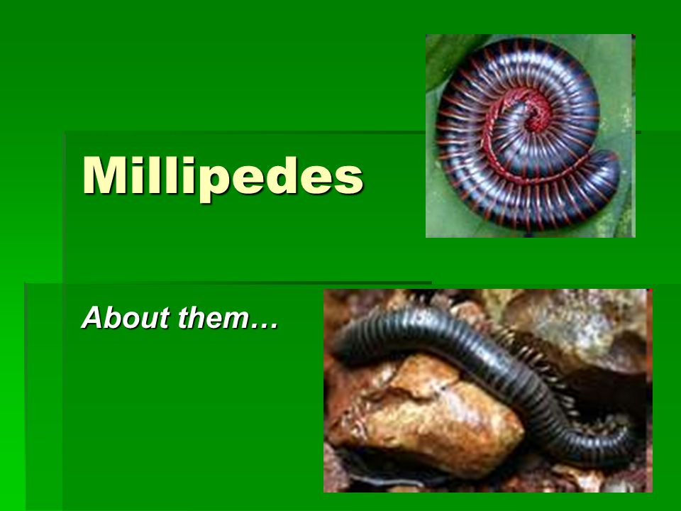 Millipedes About them…