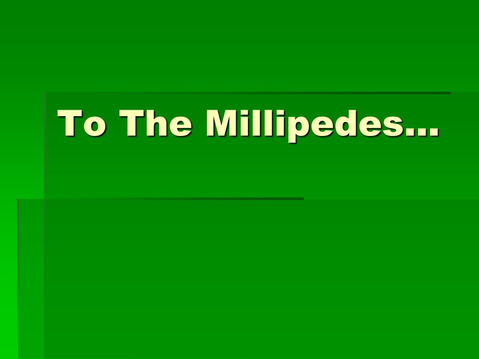 To The Millipedes…