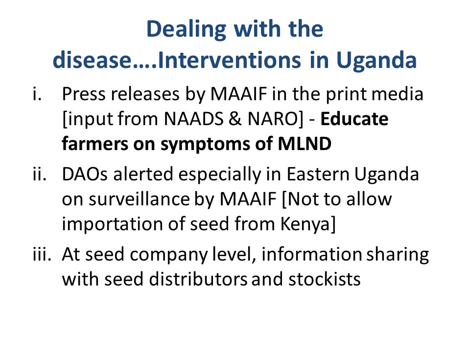Dealing with the disease….Interventions in Uganda i.Press releases by MAAIF in the print media [input from NAADS & NARO] - Educate farmers on symptoms of MLND ii.DAOs alerted especially in Eastern Uganda on surveillance by MAAIF [Not to allow importation of seed from Kenya] iii.At seed company level, information sharing with seed distributors and stockists