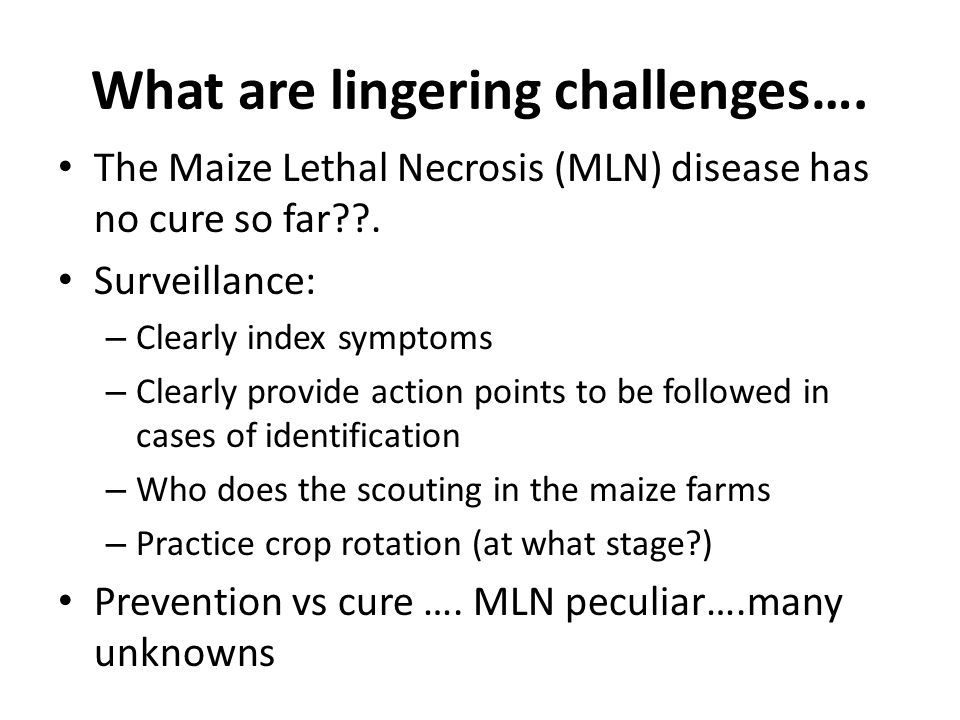 What are lingering challenges…. The Maize Lethal Necrosis (MLN) disease has no cure so far .