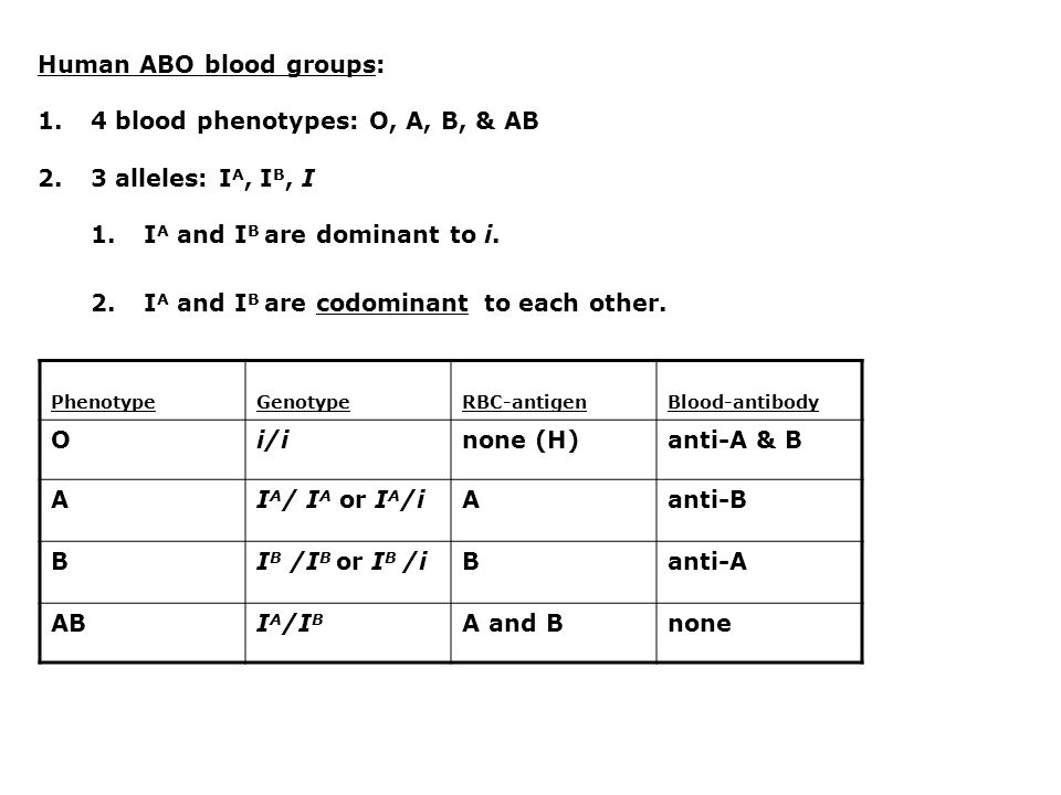 Human ABO blood groups: 1.4 blood phenotypes: O, A, B, & AB 2.3 alleles: I A, I B, I 1.I A and I B are dominant to i.