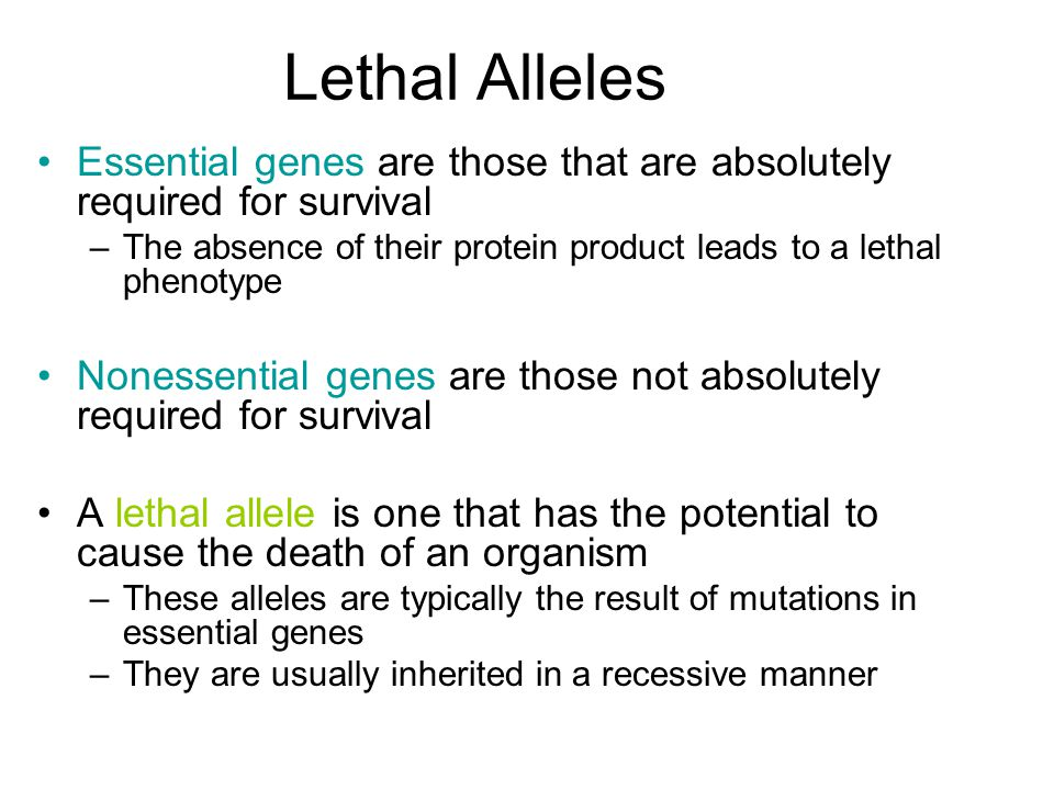 Lethal Alleles Essential genes are those that are absolutely required for survival –The absence of their protein product leads to a lethal phenotype Nonessential genes are those not absolutely required for survival A lethal allele is one that has the potential to cause the death of an organism –These alleles are typically the result of mutations in essential genes –They are usually inherited in a recessive manner