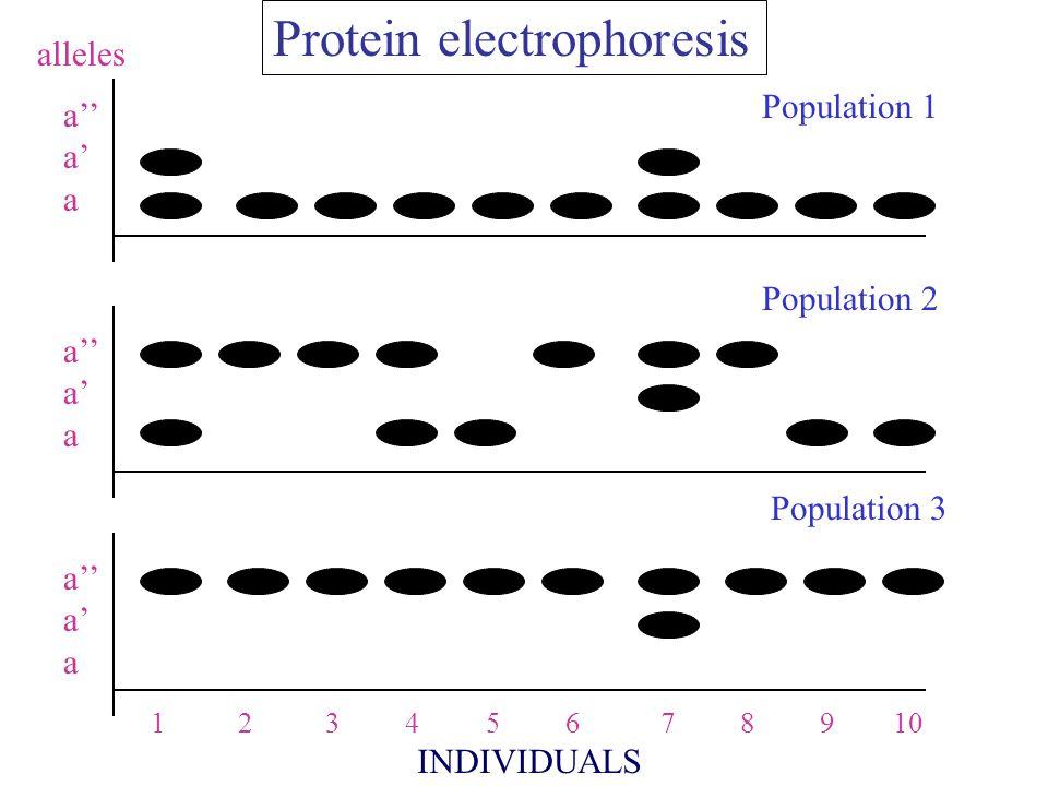 monomeric protein dimeric protein
