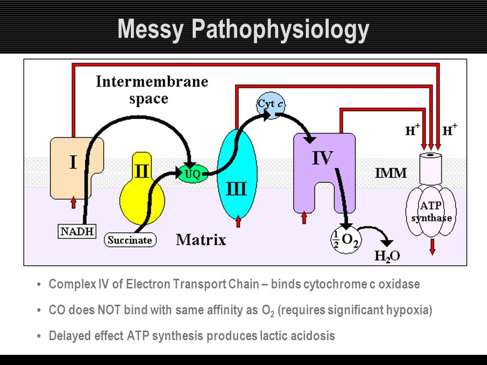 Messy Pathophysiology Complex IV of Electron Transport Chain – binds cytochrome c oxidase CO does NOT bind with same affinity as O 2 (requires signifi