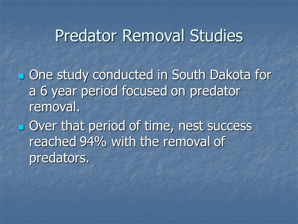 Predator Removal Studies One study conducted in South Dakota for a 6 year period focused on predator removal.