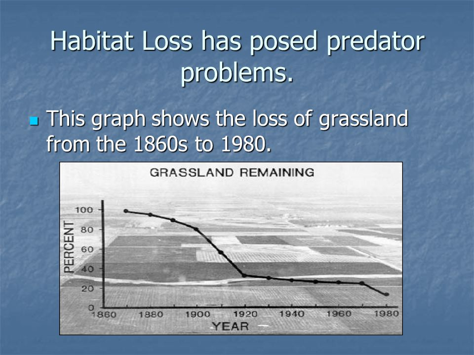 Habitat Loss has posed predator problems.