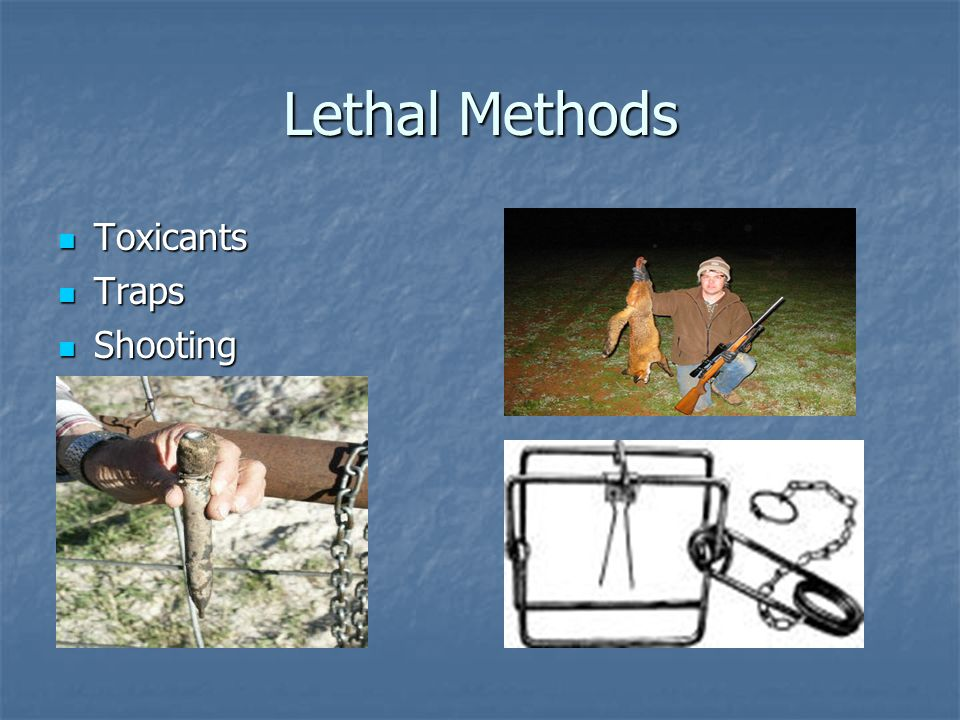 Lethal Methods Toxicants Toxicants Traps Traps Shooting Shooting
