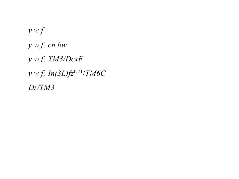 y w f y w f; cn bw y w f; TM3/DcxF y w f; In(3L)fz K21 /TM6C Dr/TM3
