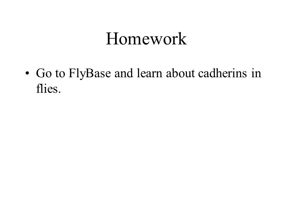 Homework Go to FlyBase and learn about cadherins in flies.