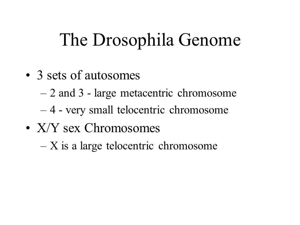The Drosophila Genome 3 sets of autosomes –2 and 3 - large metacentric chromosome –4 - very small telocentric chromosome X/Y sex Chromosomes –X is a large telocentric chromosome
