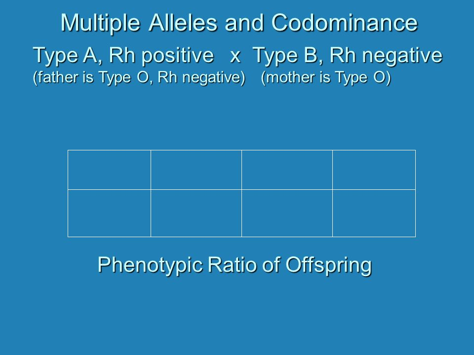 Multiple Alleles and Codominance Type A, Rh positive x Type B, Rh negative (father is Type O, Rh negative) (mother is Type O) Phenotypic Ratio of Offspring Phenotypic Ratio of Offspring