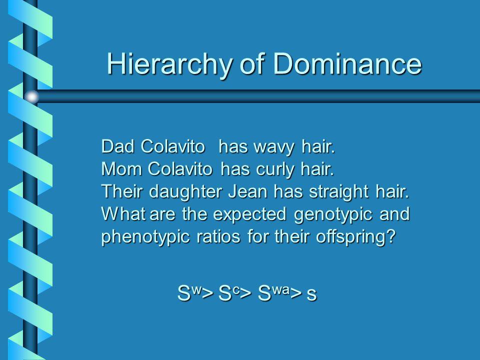 Hierarchy of Dominance Dad Colavito has wavy hair.
