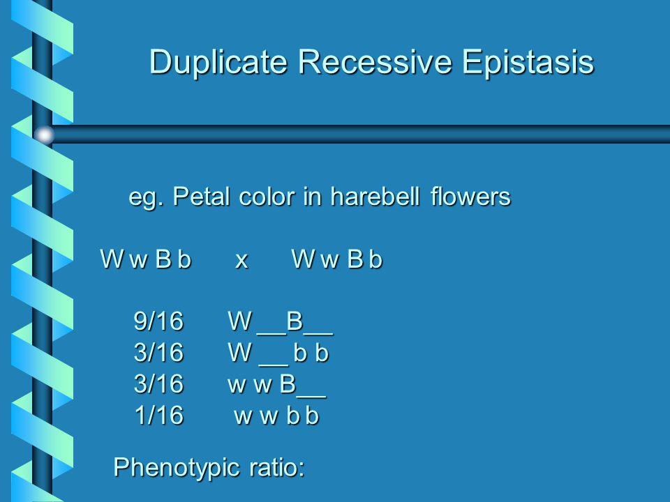 Duplicate Recessive Epistasis eg.