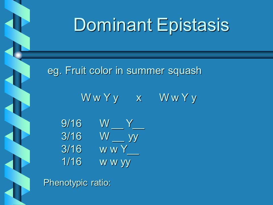 eg. Fruit color in summer squash Ww Y y x Ww Y y 9/16 W__ Y__ 3/16 W __ __ yy 3/16 w w Y__ 1/16 w w yy Phenotypic ratio:
