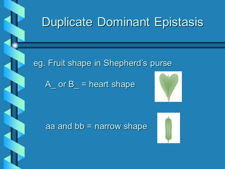 Duplicate Dominant Epistasis eg.