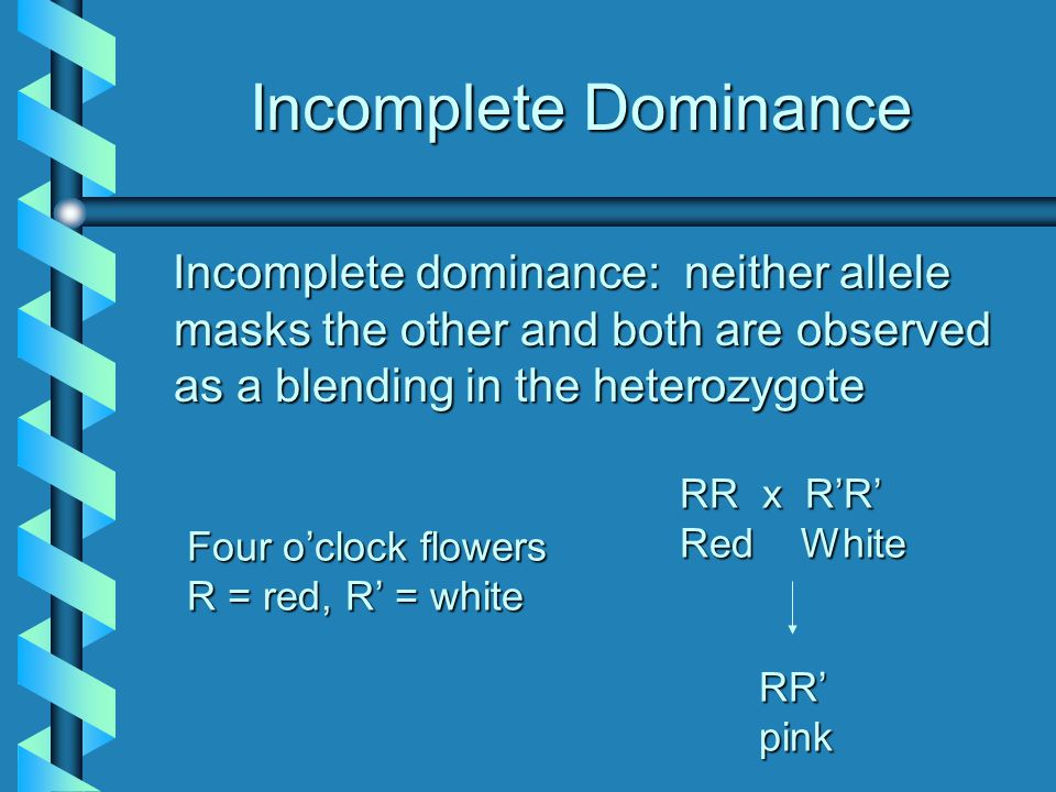 Incomplete Dominance Incomplete dominance: neither allele masks the other and both are observed as a blending in the heterozygote Four o'clock flowers
