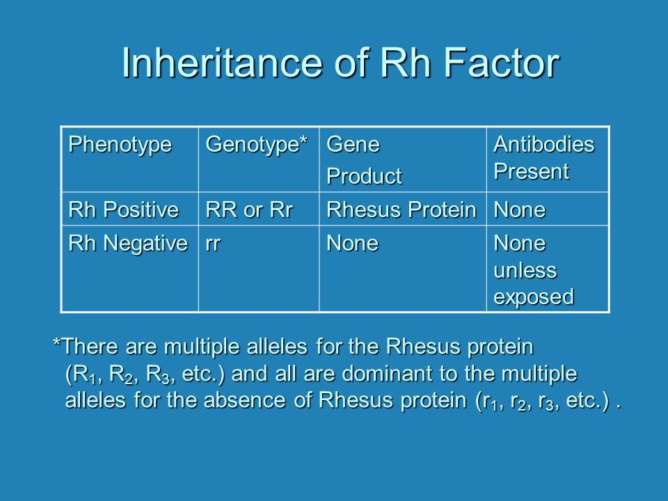 Inheritance of Rh Factor PhenotypeGenotype*GeneProduct Antibodies Present Rh Positive RR or Rr Rhesus Protein None Rh Negative rrNone None unless expo