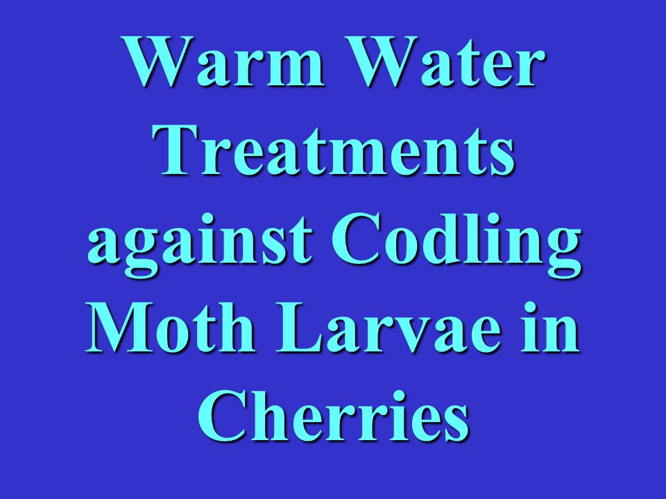 Warm Water Treatments against Codling Moth Larvae in Cherries
