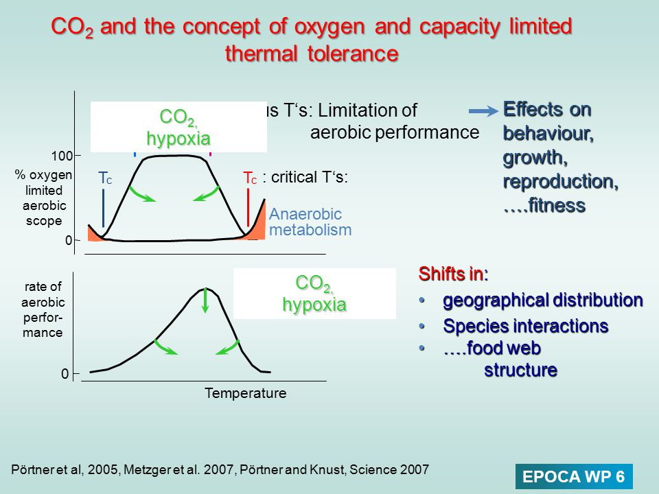 0 % oxygen limited aerobic scope TcTc TpTp TpTp : Pejus T's: Limitation of aerobic performance TcTc : critical T's: CO 2 and the concept of oxygen and
