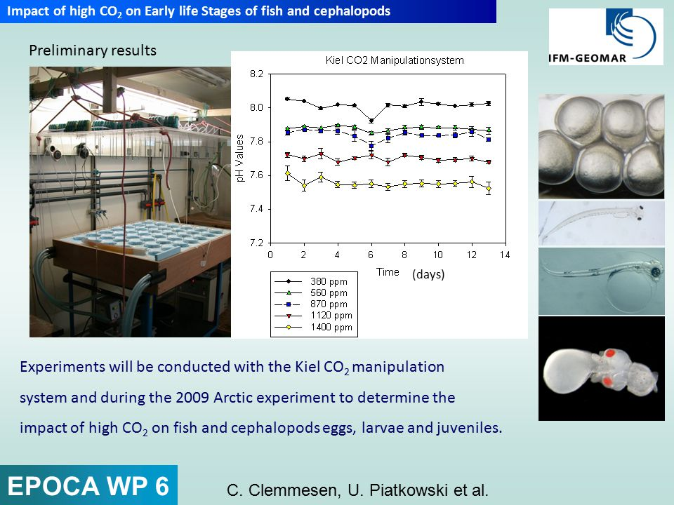 Principle considerations: Role of time scales and levels for lethal effects of CO 2 exposure Incipient lethal CO 2 level (long term critical threshold) arbitrary units Mortality independent of exposure time Zone of resistance Mortality dependent on CO 2 level and exposure time Zone of tolerance Upper median lethal CO 2 level (LD 50 ) log exposure time (days, weeks, months, years) → No such complete data set exists Tolerable organism and ecosystem (?) responses Critical level and mechanism unknown.