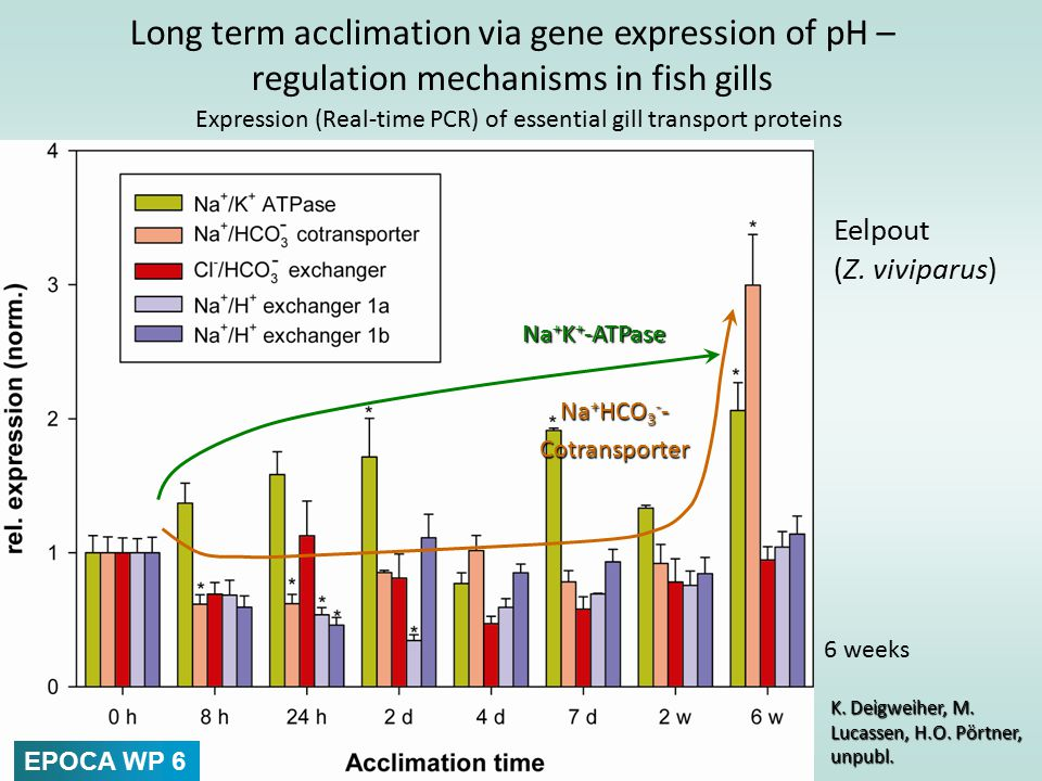 Impact of high CO2 and temperature on development and reproduction of mesozooplankton (copepods) To date, the sensitivity of juvenile stages to OA has not been assessed.