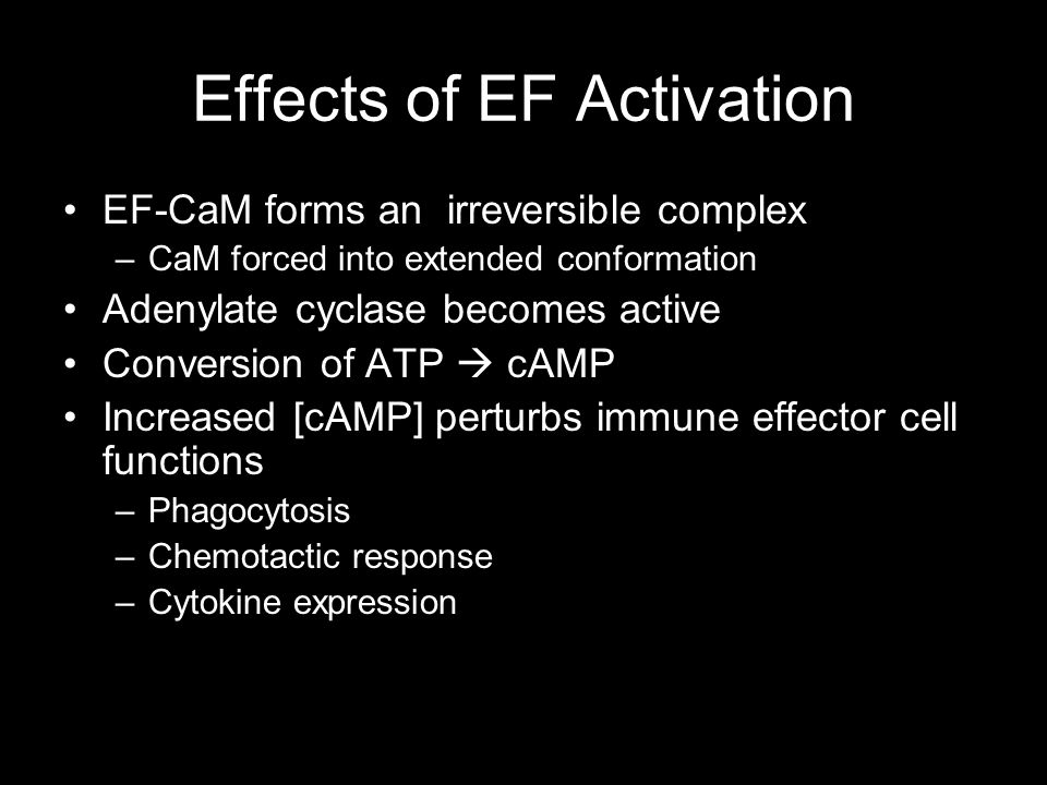 Effects of EF Activation EF-CaM forms an irreversible complex –CaM forced into extended conformation Adenylate cyclase becomes active Conversion of AT