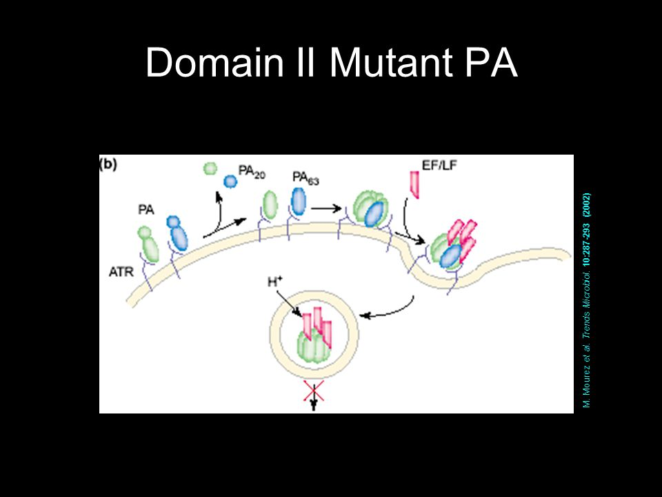 Domain II Mutant PA M. Mourez et al. Trends Microbiol. 10:287-293 (2002)