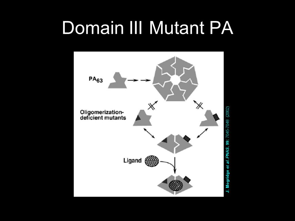 Domain III Mutant PA J. Mogridge et al. PNAS. 99: 7045-7048 (2002)