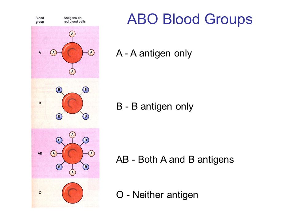 ABO Blood Groups A - A antigen only B - B antigen only AB - Both A and B antigens O - Neither antigen