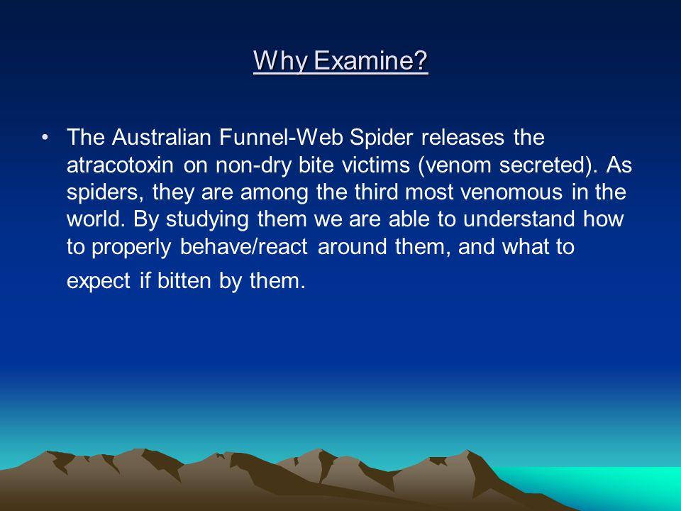 Why Examine.